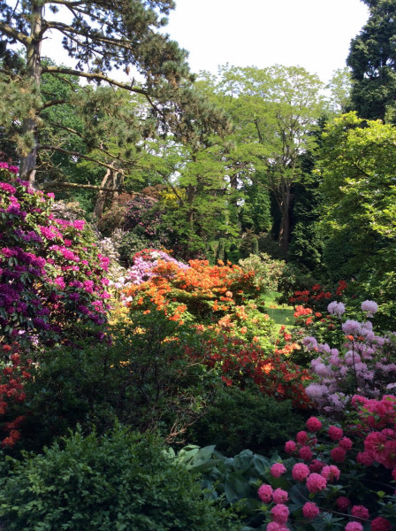 Peover Gardens June 2016
