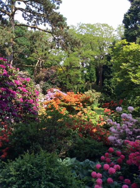 Peover Gardens June 2016